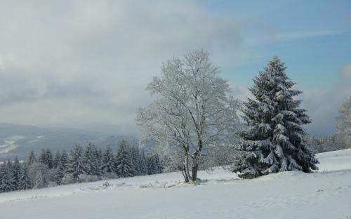 Zima na Šumavě (10 of 14)