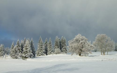 Zima na Šumavě (11 of 14)