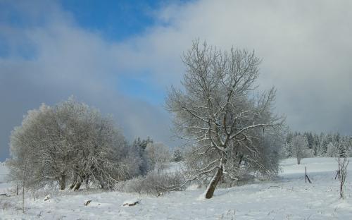 Zima na Šumavě (7 of 14)